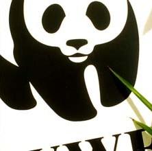 WWF_thumbnails